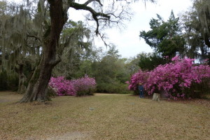 Belle Isle Plantation